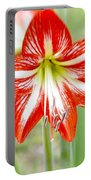 Lensbaby 2 Orange Red And White Amaryllis Blooms Portable Battery Charger