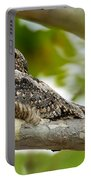 Lesser Nighthawk On Branch Portable Battery Charger