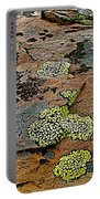 Lichens Along Trail To Plain Of Six Glaciers In Banff National Park-alberta-canada Portable Battery Charger