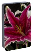 Lilium Portable Battery Charger