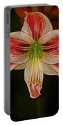 Lilly Portable Battery Charger