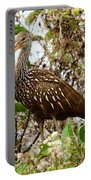 Limpkin In A Tree Portable Battery Charger
