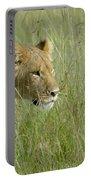 lion Masai Mara Kenya Portable Battery Charger