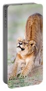Lioness Panthera Leo Stretching Portable Battery Charger