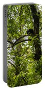 Little Bear Cub In Tree Cades Cove 2 Portable Battery Charger
