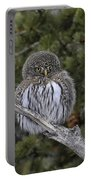 Little One - Northern Pygmy Owl Portable Battery Charger