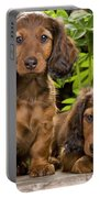 Long-haired Dachshunds Portable Battery Charger