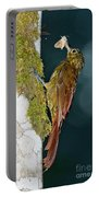 Long-tailed Woodcreeper Portable Battery Charger