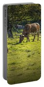 Longhorn Steer Herd In A Pasture Portable Battery Charger