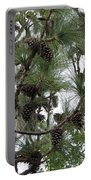 Longleaf Pine Cones Portable Battery Charger