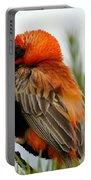 Lonley Bird Portable Battery Charger