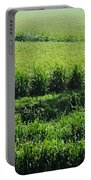 Louisiana Cane Field Portable Battery Charger