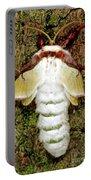 Luna Moth Actias Luna Portable Battery Charger