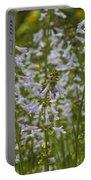 Lyreleaf Sage Wildflowers - Salvia Lyrata Portable Battery Charger