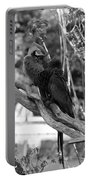 Macaws Of Color B W 15 Portable Battery Charger