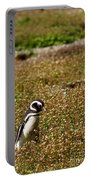 Magellanic Penguin On Martillo Island In Patagonia Portable Battery Charger