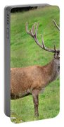 Male Deer On Field Portable Battery Charger