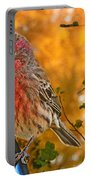 Male Finch In Autumn Leaves Portable Battery Charger