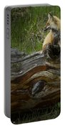 Male Fox   #3575 Portable Battery Charger