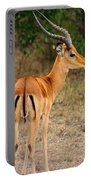 Male Impala With Horns Portable Battery Charger