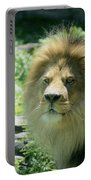 Male Lion Up Close Portable Battery Charger