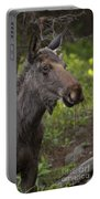 Male Moose   #5696 Portable Battery Charger
