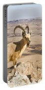 Male Nubian Ibex Capra Ibex Nubiana 1 Portable Battery Charger