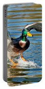 Mallard Drake Skiing To A Stop Portable Battery Charger