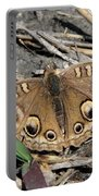 Mangrove Buckeye  Portable Battery Charger