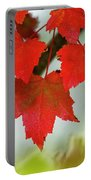 Maple Leaves Show Off Their Autumn Hues Portable Battery Charger