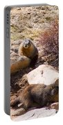 Marmots On Mount Evans Portable Battery Charger