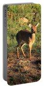 Masai Mara Dikdik Deer Portable Battery Charger