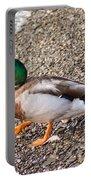 Meet Mr. Quack - A Mallard Duck Portable Battery Charger