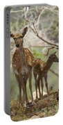 Mesopotamian Fallow Deer 4 Portable Battery Charger