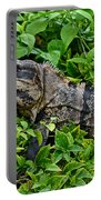 Mexican Spinytailed Iguana  Portable Battery Charger
