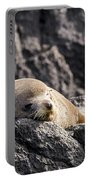Montague Island Seal Portable Battery Charger