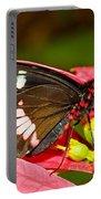 Montezuma Cattleheart Butterfly Portable Battery Charger