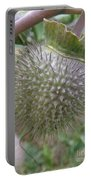 Moon Flower Seed Pod Portable Battery Charger