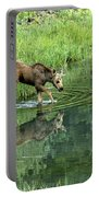Moose Calf Testing The Water Portable Battery Charger
