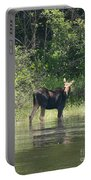 New Hampshire Grazing Cow Moose  Portable Battery Charger