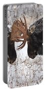 Moose Fighting, Gaspesie National Park Portable Battery Charger