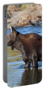Moose On The  Gros Ventre River Portable Battery Charger