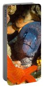 Moray And Starfish Portable Battery Charger