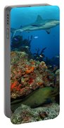 Moray Reef Portable Battery Charger