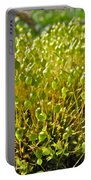 Moss And Fruiting Bodies - Green Lane Pa Portable Battery Charger