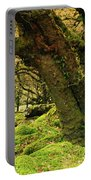 Moss Covered Trees In A Forest Portable Battery Charger