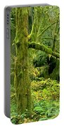 Moss Draped Big Leaf Maple California Portable Battery Charger