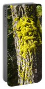 Moss On Tree Along Sentinel Dome Trail In Yosemite Np-ca Portable Battery Charger