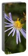 Moth Feeding On Aster Dragon Portable Battery Charger