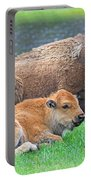Mother Buffalo And Calf Yellowstone Portable Battery Charger